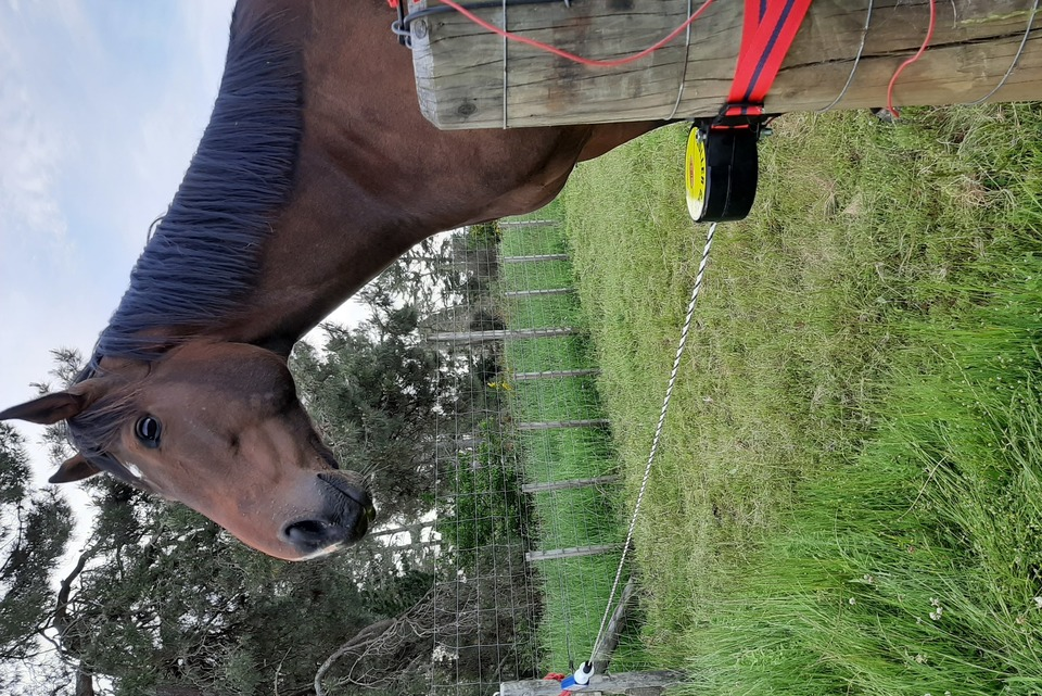 A Horse Waiting for the Batt-Latch with Roller Gate to let him into New Pasture